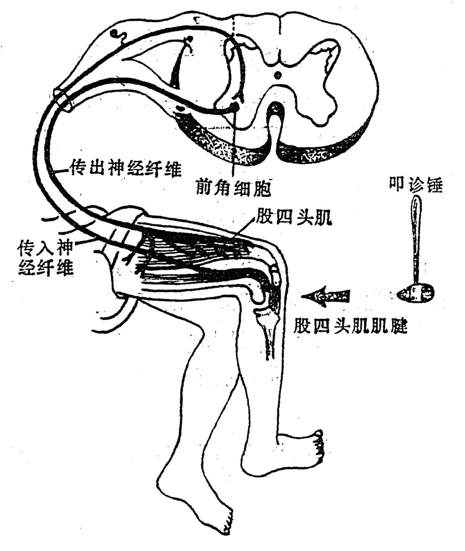 人脑结构示意图