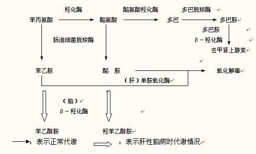由此引起的后果有:①α-酮戊二酸是三羧酸循环的重要