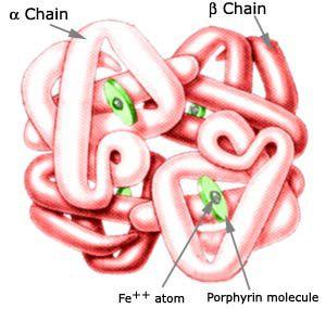 血红蛋白空间结构